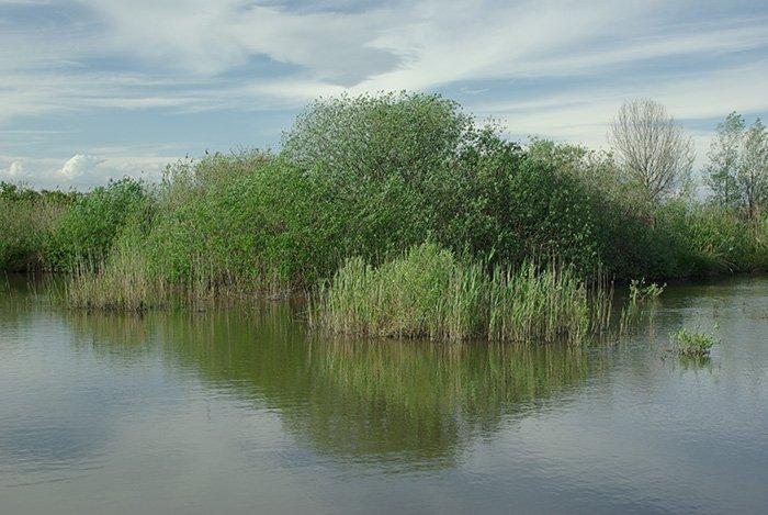 Oasi Naturale Palude del Busatello (2km)